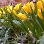 Květinová výzdoba na Febiofest
